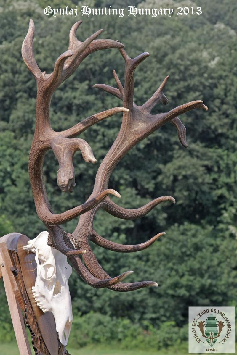 Eugen, the miracoulus stag